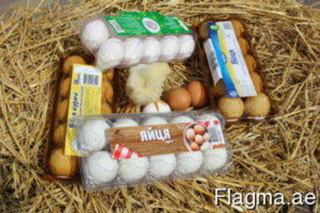 Tray for chicken eggs from PET transparent packaging