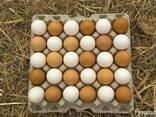 Яйцо свежее халяль С0, С1 - фото 2