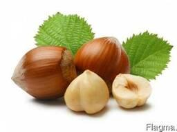 Фундук Hazelnuts