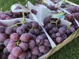 Grape Macedonia - photo 1
