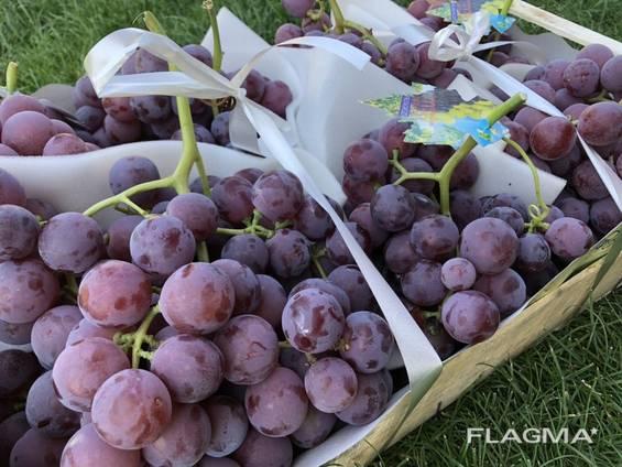 Grape Macedonia