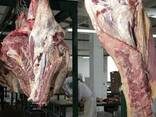 Halal Meat Beef Half/Quarter Carcasses - photo 4