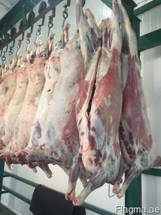 Halal Meat Mutton (Lamb) wholesale export
