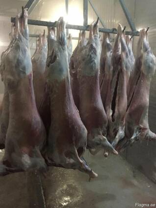 Mutton (export of lamb to UAE)