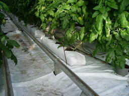 Peat moss for green houses