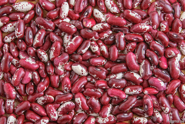 Quality 3D beans from Kyrgyzstan Фасоль