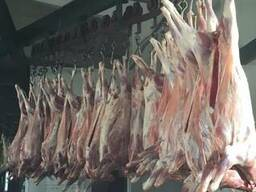 شركة SLK Kronos تعمل في مجال استيراد وتصدير اللحوم