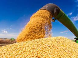Соя без ГМО